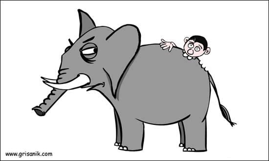 Image result for eat an elephant one bite at a time